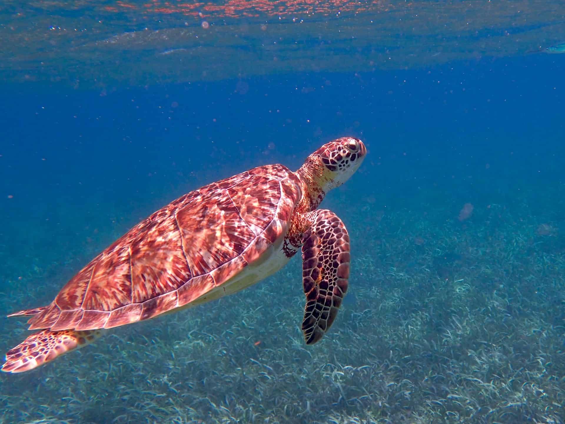 Belize Urlaub - Top 10 Hotspots Südamerika Insel Traum