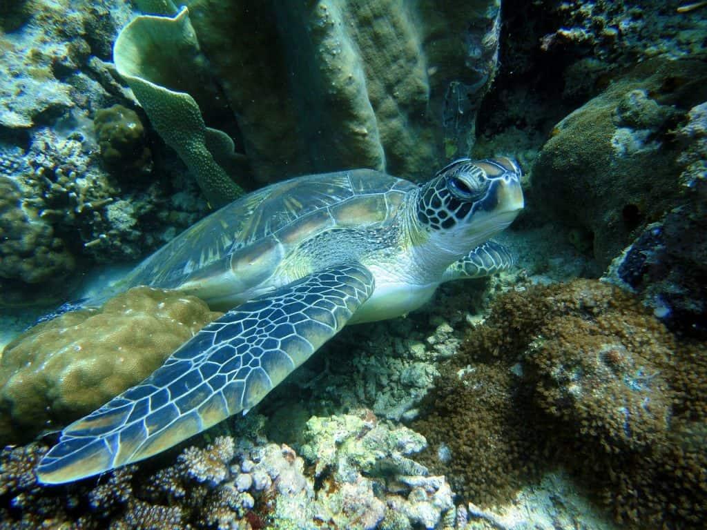 Die Unterwasser Welt ist zum Tauchen & Schnorcheln ein Traum