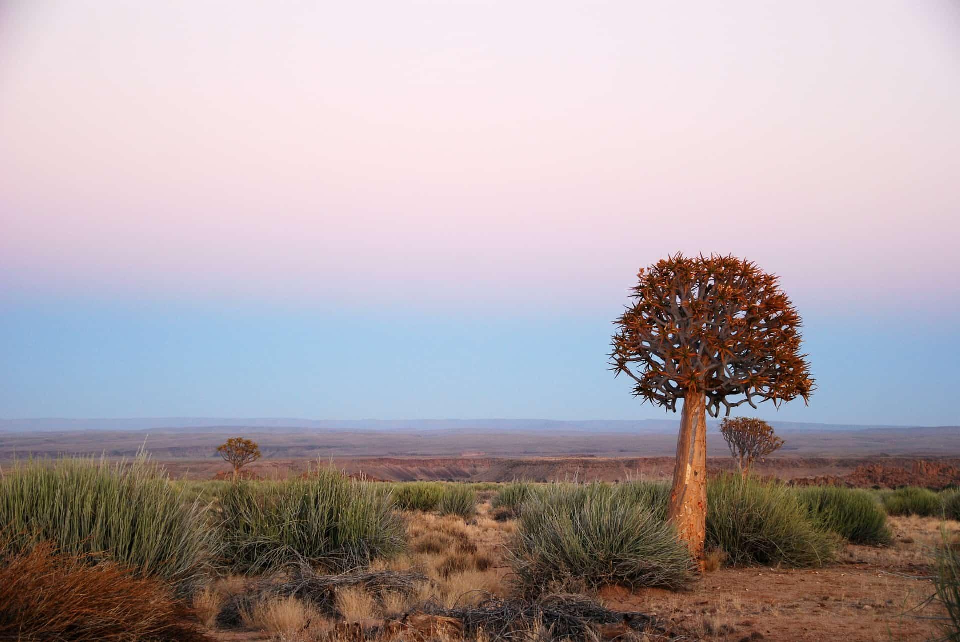 Namibia Urlaub ab 979,00€ Pauschalreisen & Rundreisen zum Tiefpreis
