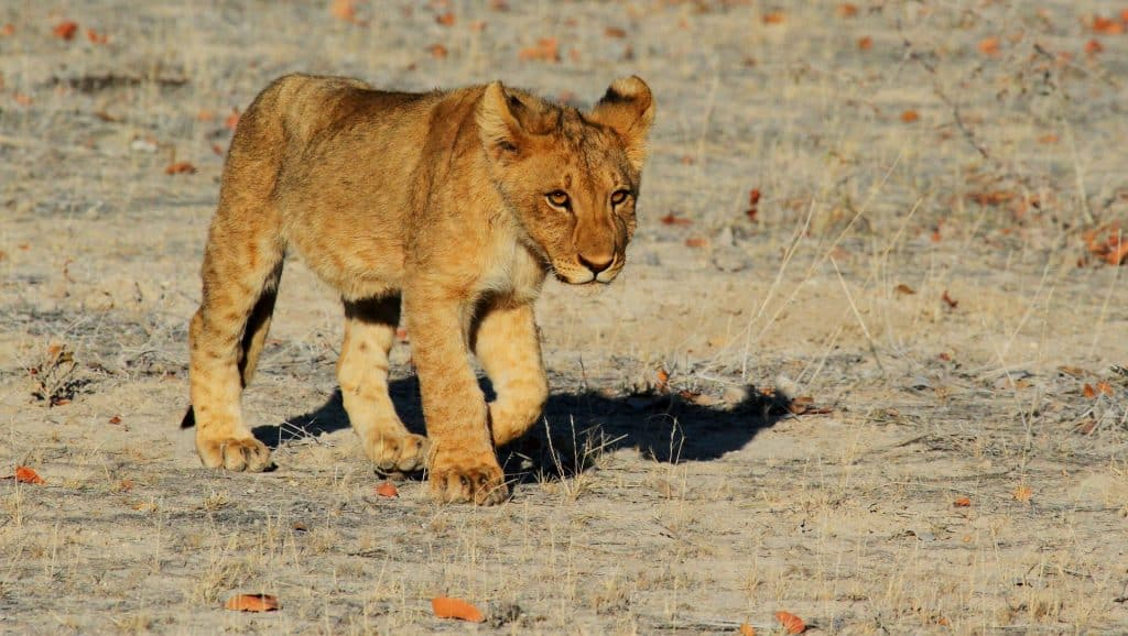 Namibia Urlaub auf Safari ob Rundreisen oder bei Pauschalreisen
