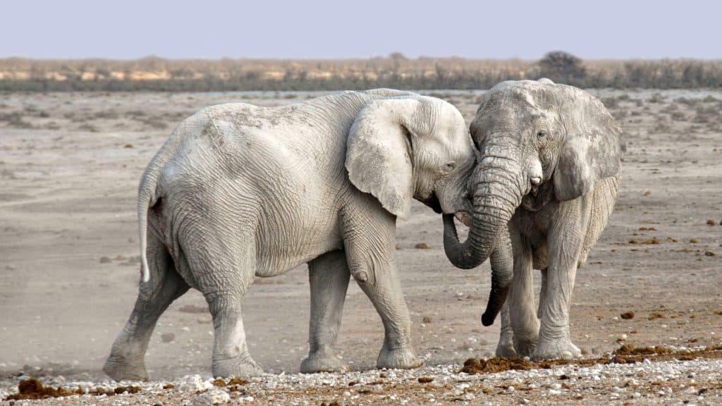 Safari Rundreisen in Namibia - Frieden für die Seele