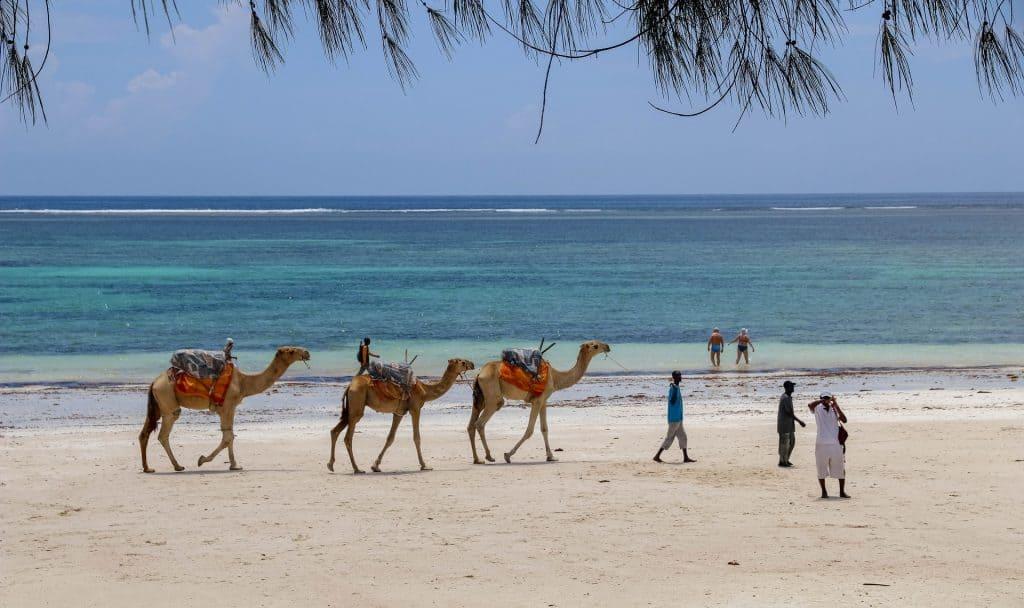 Safari im kleinsten Staat Afrikas