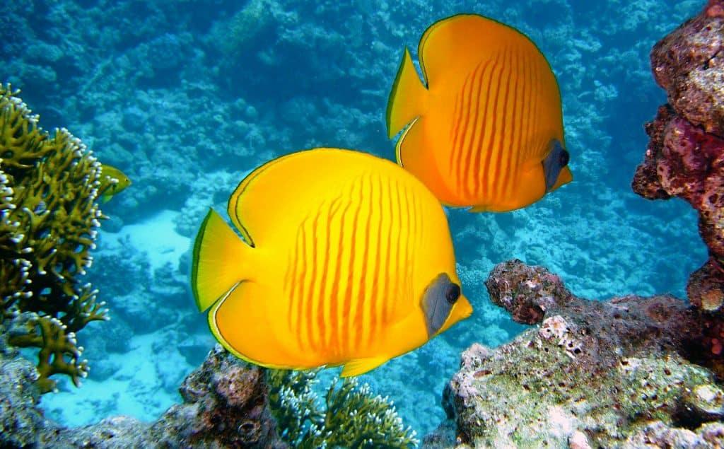 Bunte Unterwasserwelt der Balearen