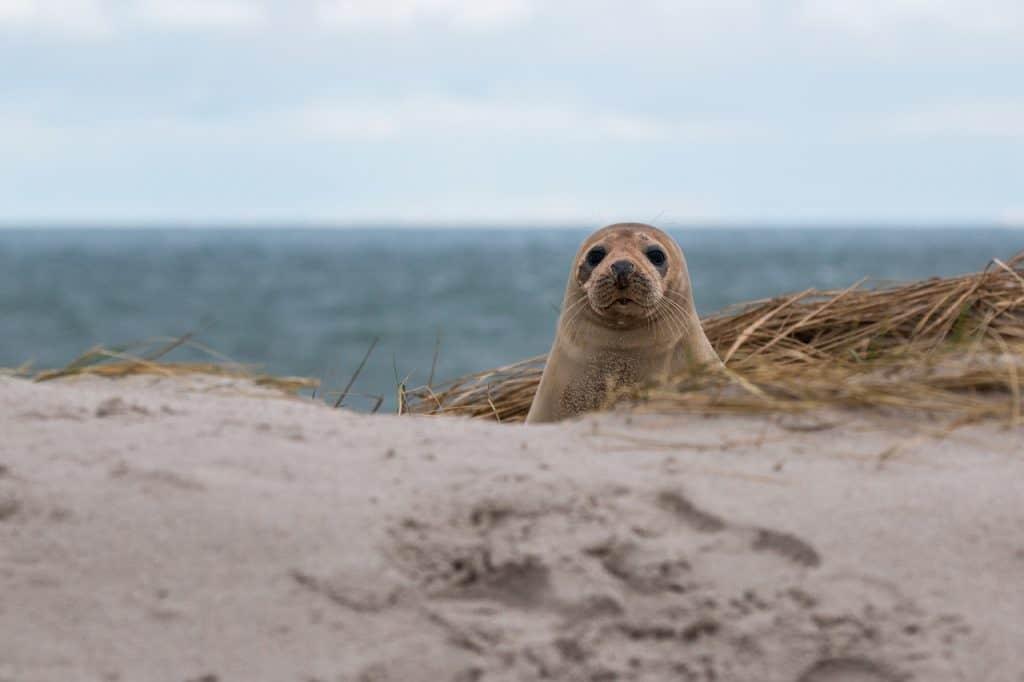 Robben und anderen wunderschönen Tieren begegnet man im Wattenmeer immer