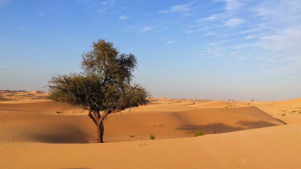 Auch die Hauptstadt der Emirate liegt inmitten der Wüste
