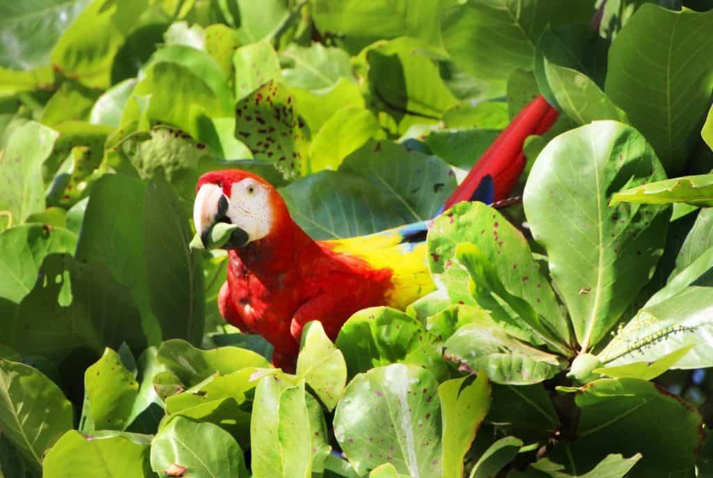 Papagei - standart das die Tiere in dem Land in allen farben strahlen