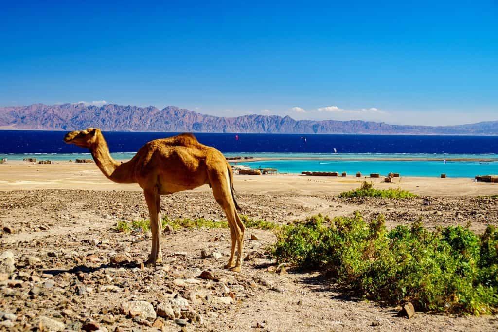 Atemberaubende Kulisse findet man in Ägypten für einen Badeurlaub - vorallem Familien feiern es