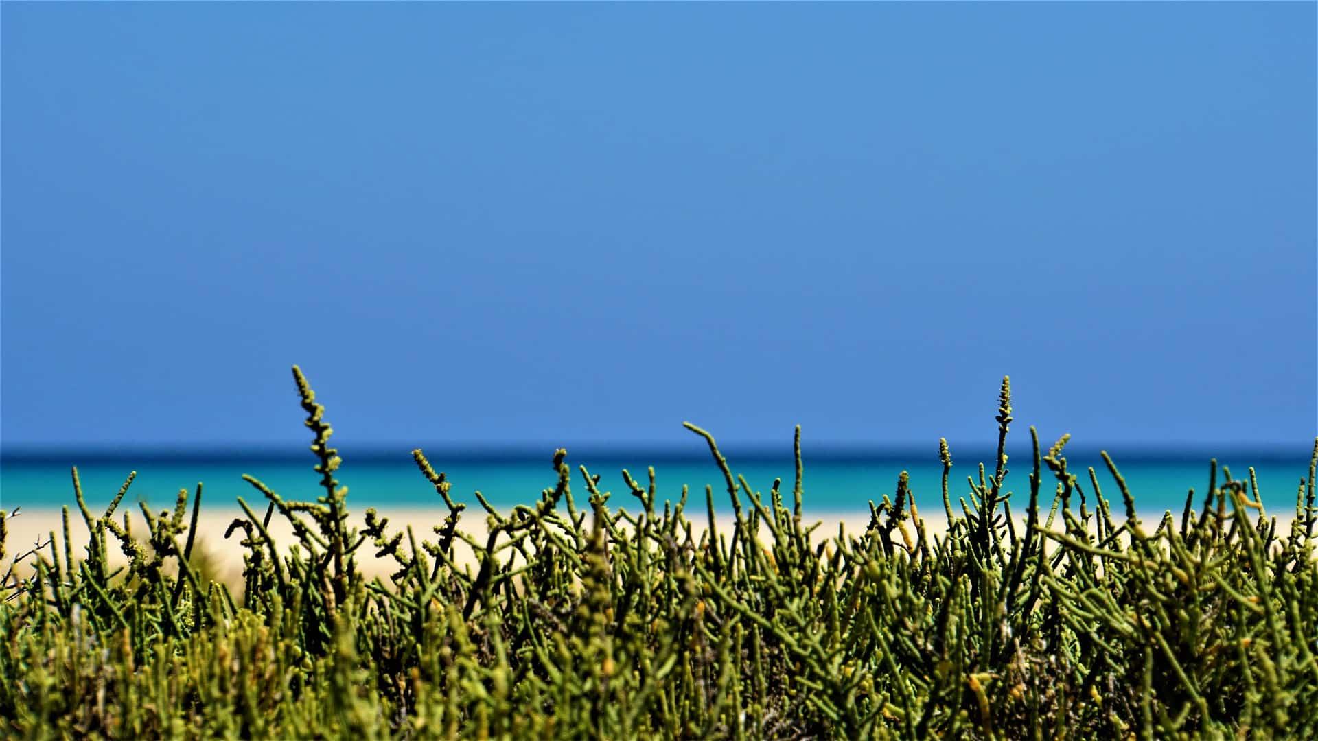 Fuerteventura Flug - nur 16,81€ Billige Kanaren Flüge