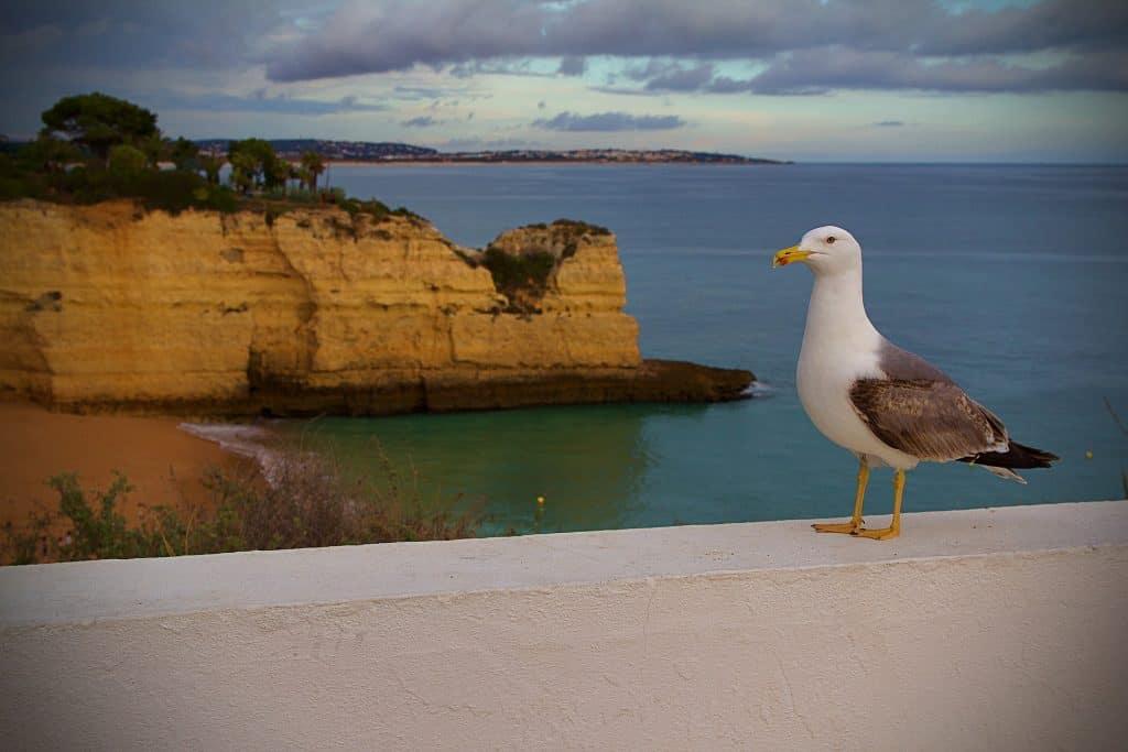 Die Sonnenuntergänge an der Algarve sind einer der schönsten Europas