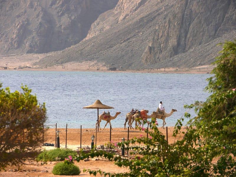 Direkte Strandlage hat die Ferienanlage in Dahab