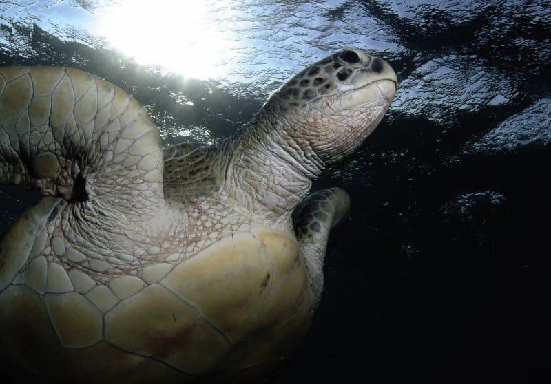 Eine atemberaubende Unterwasserwelt erwartet man hier